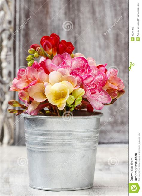bouquet  colorful freesia flowers stock image image