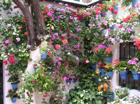 Secret Garden Flower Cordoba S Secret Gardens Flowers Nature Background Wallpapers On Desktop Nexus Image 1467585