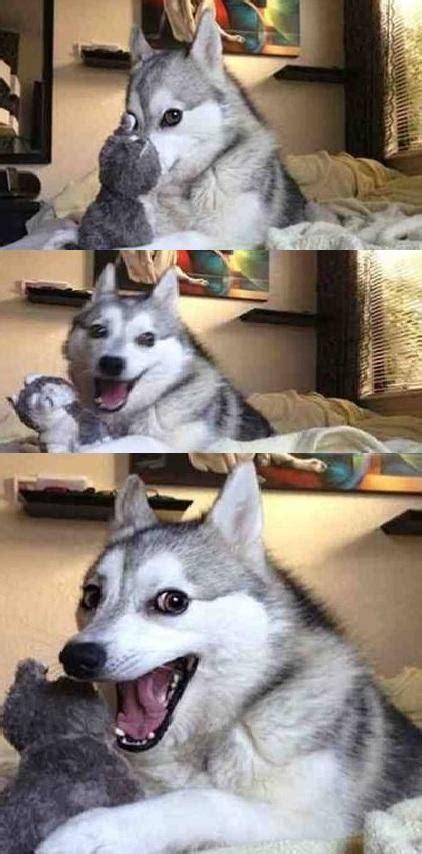 Dog Pun Meme - dog joke blank template imgflip