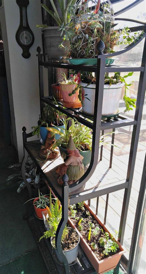 indoor house plant care   fall  winter