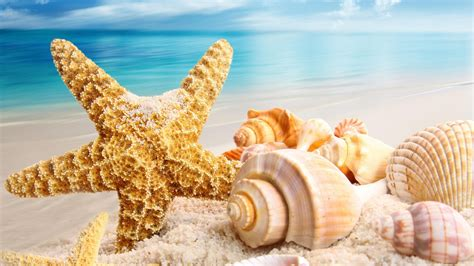 Starfish Squishy Glow In The Squishy By Vlo starfish tag wallpapers page 2 sea starfish reef coral iphone background summer