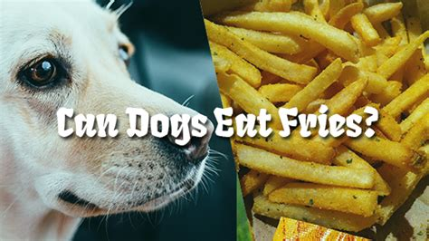 can dogs eat fries can dogs eat fries pet consider