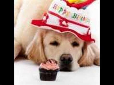 imagenes graciosas de cumpleaños con animales tarjetas de cumplea 241 os frases de cumplea 241 os originales