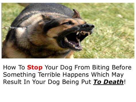 how to get puppy to stop biting you my bites me how to stop from biting