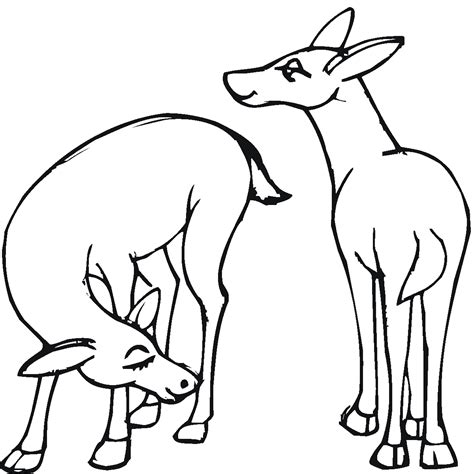 deer family coloring pages free coloring pages of deer with antlers