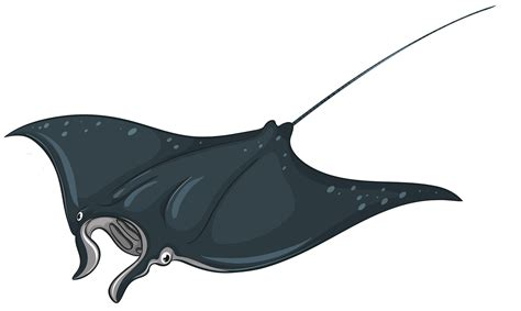 skate fish png clipart best web clipart