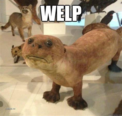 Welp Meme - whep substandard otter taxidermy quickmeme