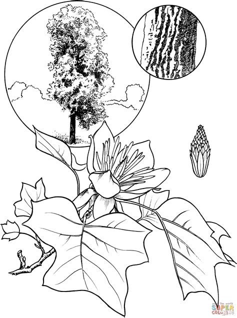 Tulip Leaf Coloring Page | 1000 images about school social studies on pinterest