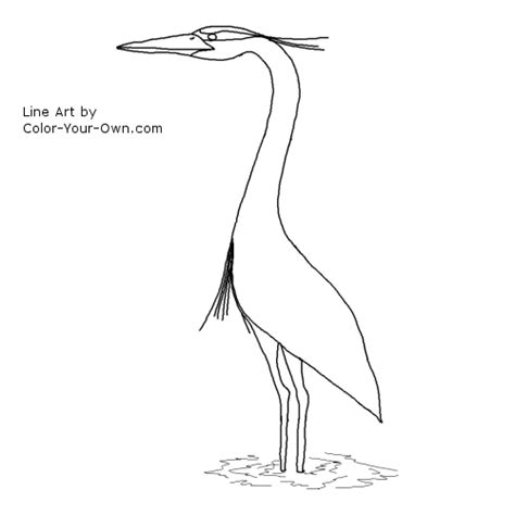 what color is heron great blue heron coloring page