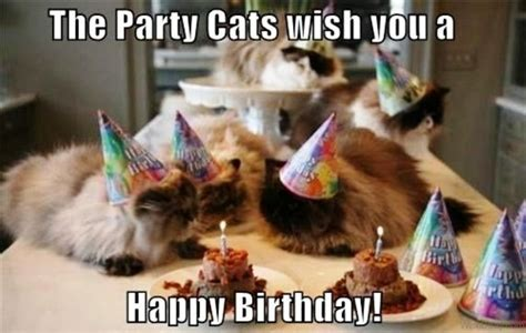 Happy Birthday Wishing You 86 Cat Birthday Wishes