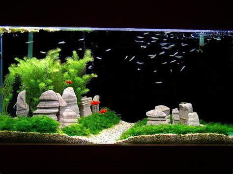 Jual Lu Pl Aquascape escahmo s 3 ft planted aquascape