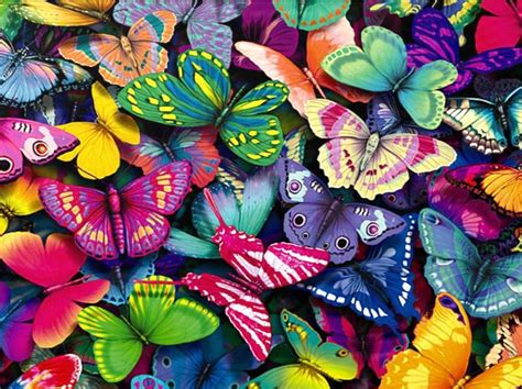 colorful butterfly wallpaper free download download fantastic butterfly screensaver animated