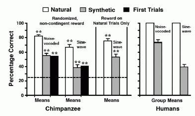 chimpanzee food chain diagram chimpanzee food chain diagram 28 images rainforest