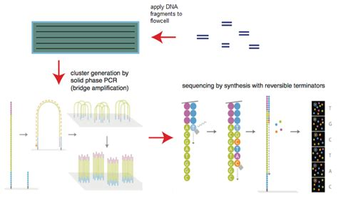 sequencing illumina rna seq gene expression profiling