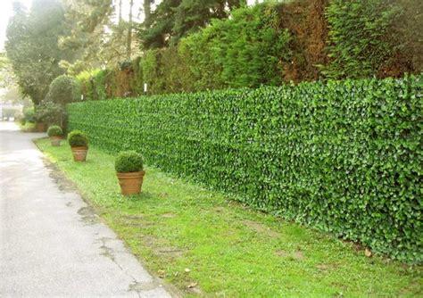 siepi artificiali da giardino edera siepi artificiali viridium