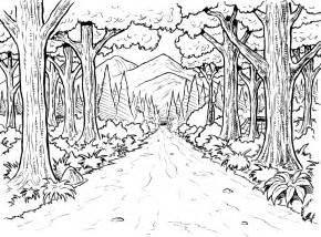 rainforest coloring pages free rainforest coloring pages free coloring pages