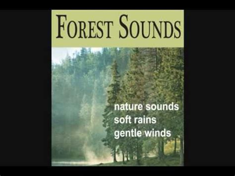 forest sounds nature sounds soft rains gentle winds songbirds youtube