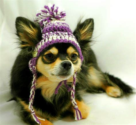 beanies for dogs dogs who are not amused with their new hats