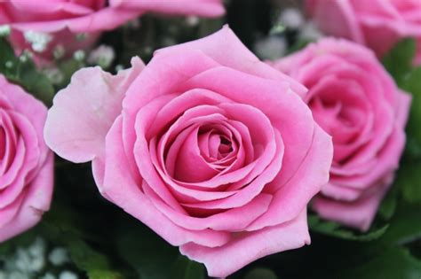 foto artistiche fiori foto e immagini di fiori come sfruttarle al meglio per