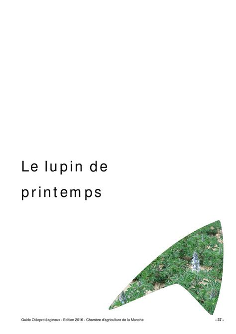 chambre agriculture 37 guide lupin de printemps 2015 by chambre d agriculture