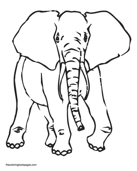 easy elephant face coloring coloring pages