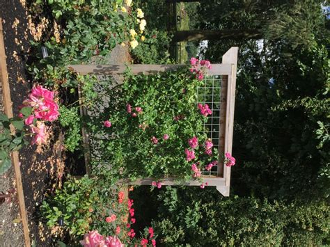 ideas for climbing rose supports outdoor wrought iron trellis trellis arch trellis
