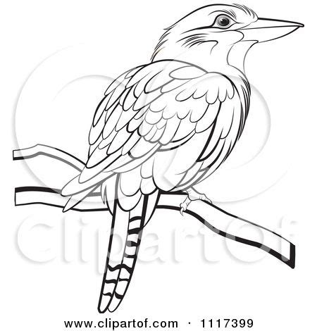 kookaburra coloring page free 17 best images about kookaburras on pinterest free