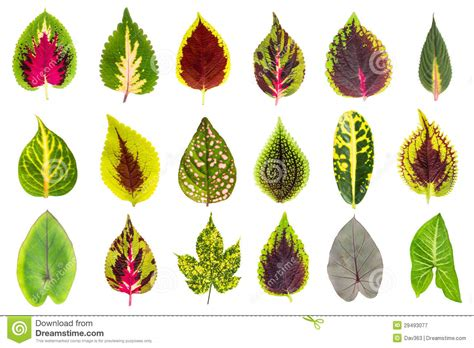 exotic leaf collection set royalty  stock photography
