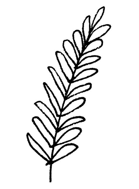 simple fern drawing www pixshark com images galleries