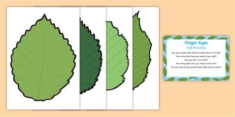 Kain Cvc Premium Bay Leaf eyfs leaf munching finger plan and prompt card pack the