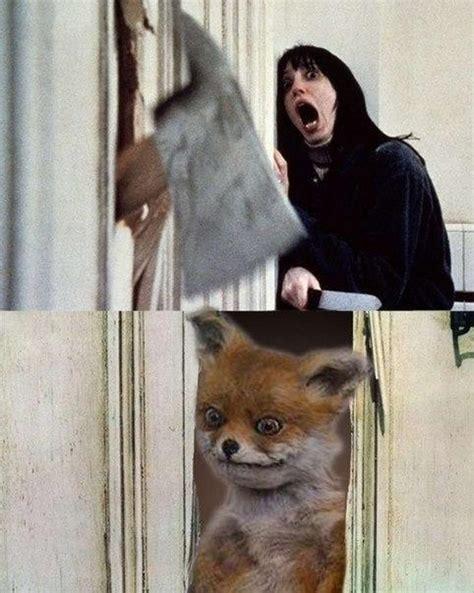 Stoned Fox Meme - stoned fox meme