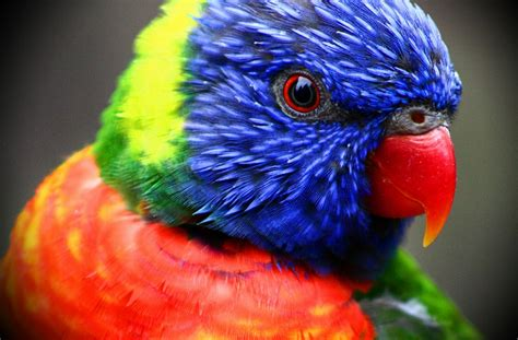 wallpapers of colorful animals colorful birds tropical head 3888x2558 wallpaper animals