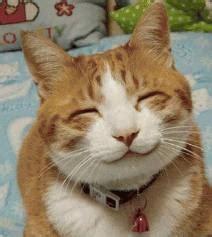 kumpulan gambar hewan lucu bikin ketawa gambargambarco