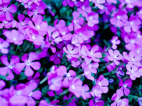 purple flowers for garden flowers for garden smalltowndjs