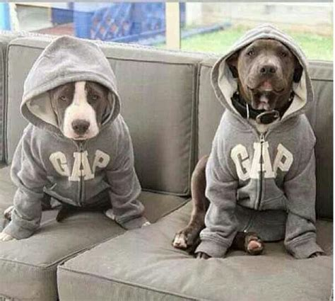 Sweater Pit Bull Imbong 40 best gap images on gap trainers and arch