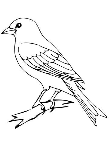 perched canary bird coloring page supercoloring com
