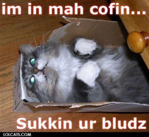 Lol Cat Meme - lolcats lol cats photo 32524623 fanpop