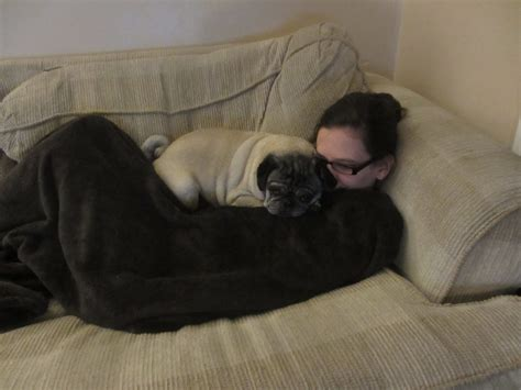 pugs in apartments why pugs make apartment pets