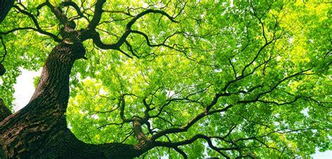 A Tree - sydney tree solutions tree removal sydney tree surgeon