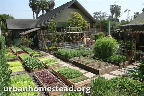 backyard homestead foodscaping revolution grow food now lawns we should