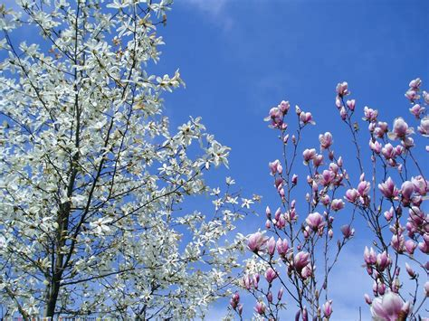 foto fiori per desktop sfondi desktop natura e paesaggi