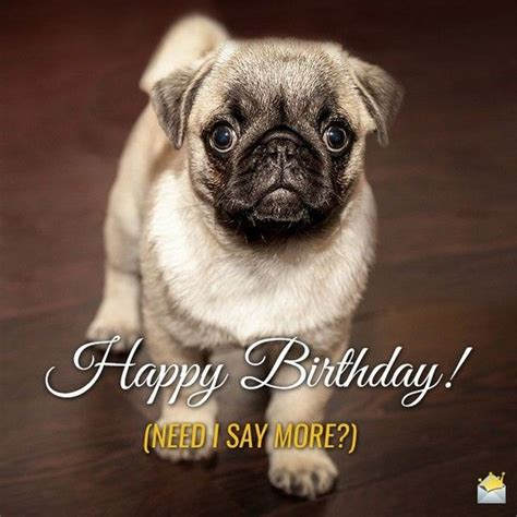 Birthday Pug Meme - happy birthday meme hilarious funny happy bday images