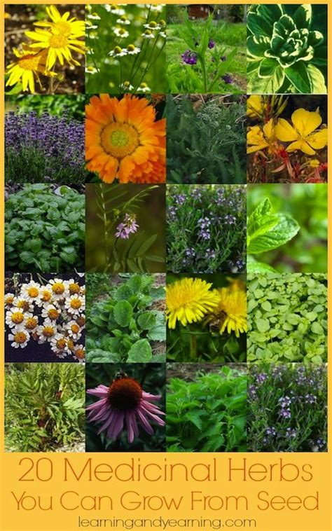 growing herbs indoors from seeds 114 best images about health and medicine on pinterest