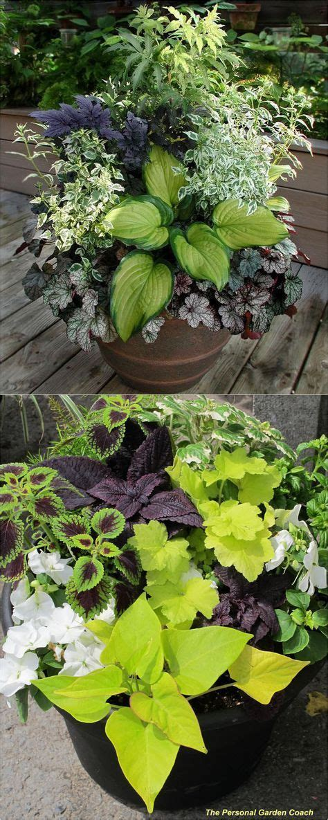 design exle 3 sixteen plants are assigned to 1605 best container gardening ideas images on garden container pots and flowers