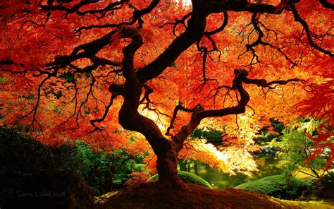 autumn color feng shui for fall transition seasonal feng shui tips