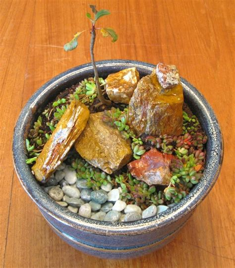Indoor Rock Garden Add A Touch Of Zen To Your Home With An Indoor Rock Garden Hometone