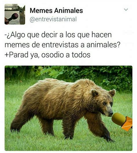 imagenes de memes animales algo que decir de los memes de animales tienewasa com