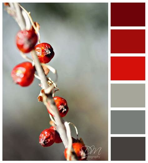 color combination with red 25 best ideas about red color palettes on pinterest red
