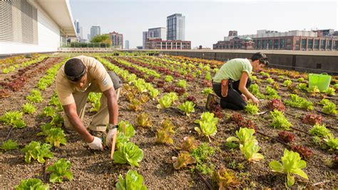 Food Near Botanic Gardens Rooftop Farming Is Getting The Ground Bay Area Bites Kqed Food
