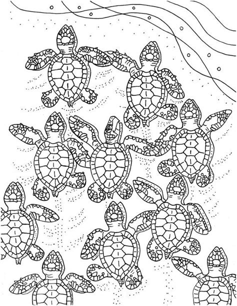 coloring pages for adults turtles 96 best images about sea turtle stuff for c on pinterest